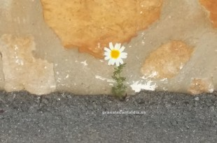 florgranalacant